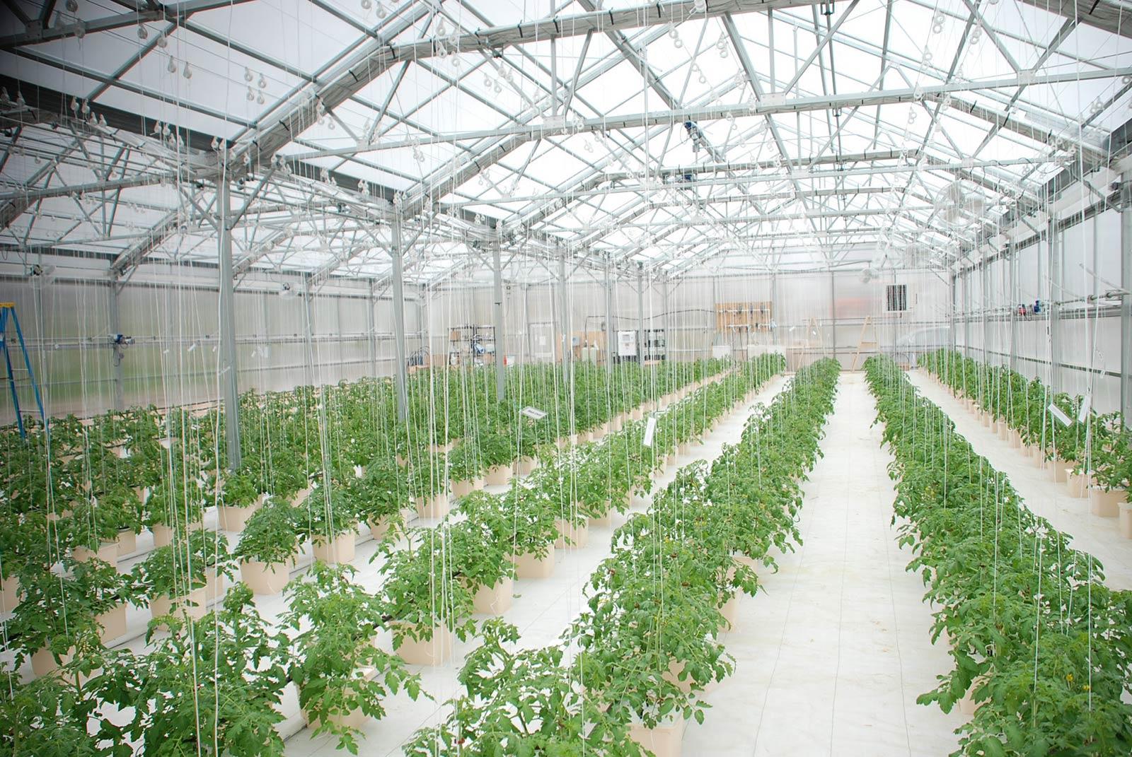 Penerapan Sistem Rumah Kaca Pertanian Oleh Mitra Usaha Tani