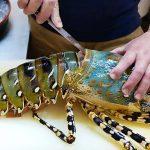 Usaha Pembesaran Lobster Untung besar